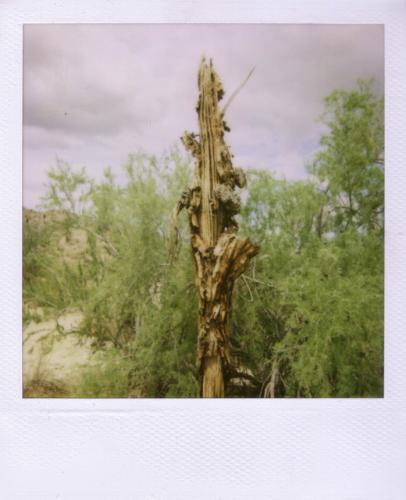 rotte cactus