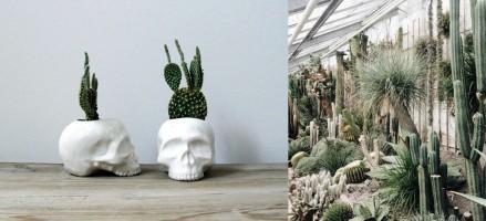 Dus zelfs die cactus blijft bij jou niet leven?