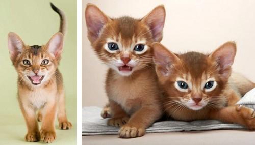 abeggijn kitten