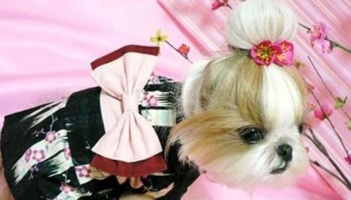 Hond in Kimono