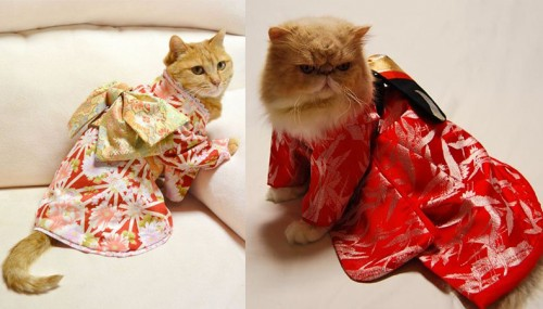 kimonokatten