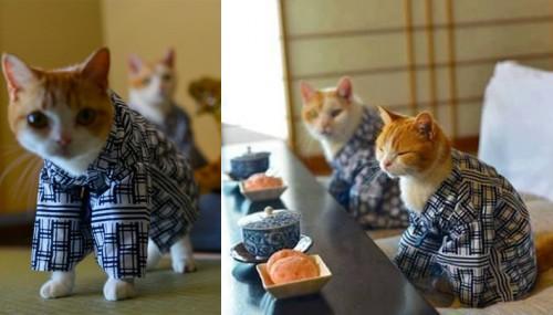 poezen in kimono