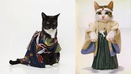 verklede katten
