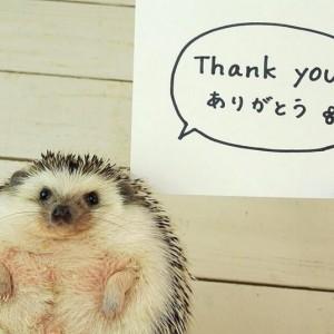 Hedgehog-15_2879448k