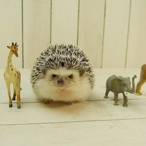 Hedgehog-5_2879435k