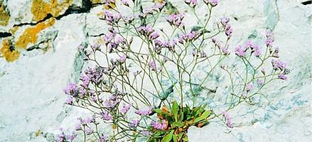 Natuurlijke beautyproducten pluk je zelf uit de tuin