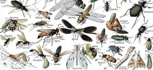 5 manieren om insecten uit je buurt te houden
