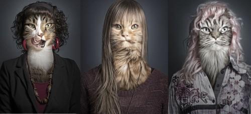 Deze fotograaf zorgt ervoor dat jouw kat als twee druppels wat...