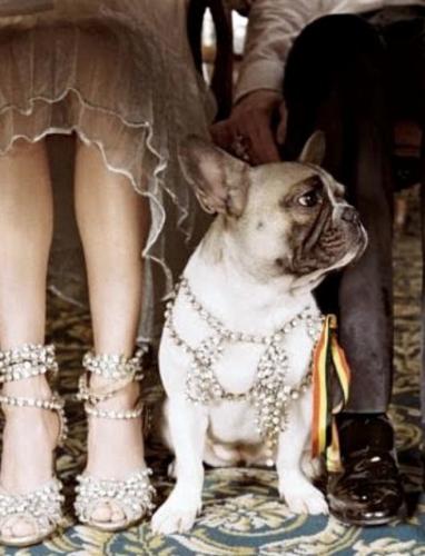 honden accessoires