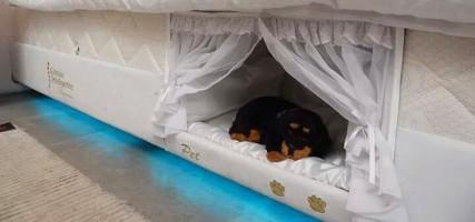 WANT: matras met ingebouwde slaapplek voor je huisdier