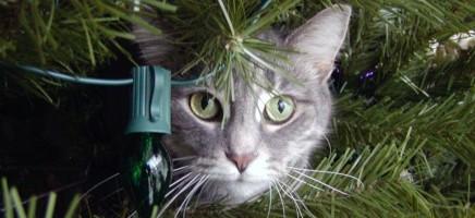 11 x kattige kerstversiering in de kerstboom