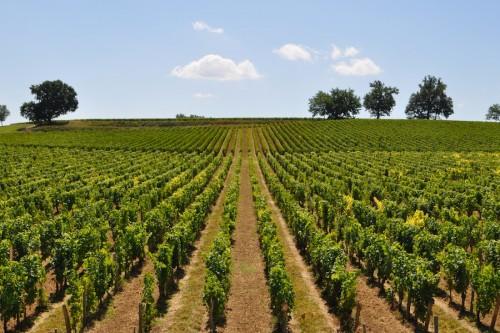 Beste-Wijnstreken-Bordeaux