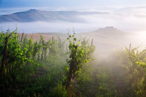 Beste-Wijnstreken-Toscane