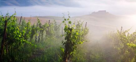 De 10 beste wijnstreken ter wereld
