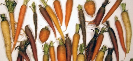 Wat gebeurt er met je lichaam als je iedere dag wortels eet?
