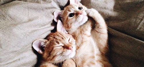 FINALLY: Gronings kattencafé organiseert 'Cats & Yoga'