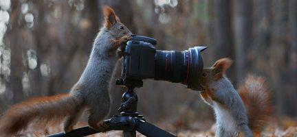 Cuteness overload: deze fotoshoot met eekhoorns is het liefste...