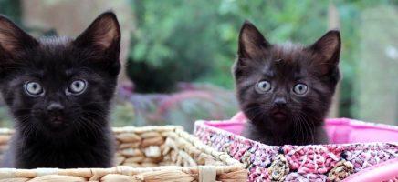 Deze dakloze katten miauwen je zen