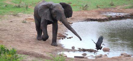 Kwazulu-Natal deel 1: Tembe Elephant Park