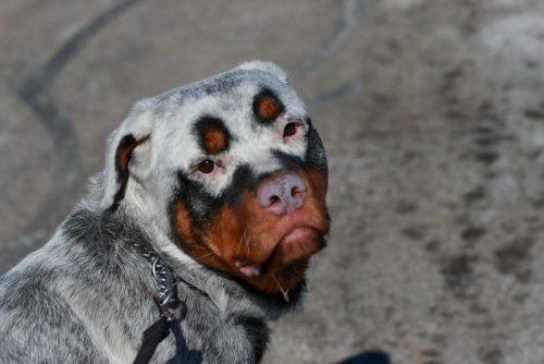 Dieren met de huidziekte Vitiligo, dat is bijzonder!