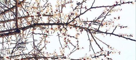 Gekke feitjes over de lente