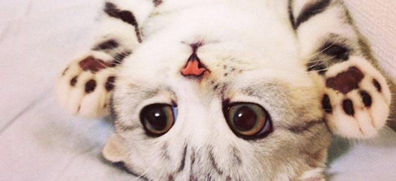 Deze kat heeft ongelofelijke grote ogen, iets voor jou?
