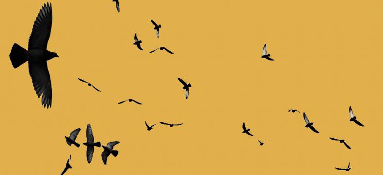 Het is vandaag bevrijdingsdag maar wat betekent vrijheid voor ...