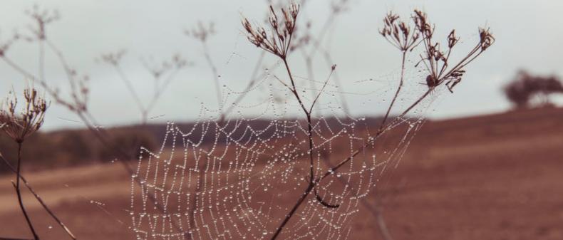 Zo jaag jij in mum van tijd alle spinnen uit je huis