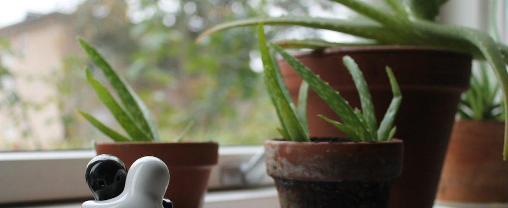De Aloë Vera plant mag niet ontbreken in je interieur