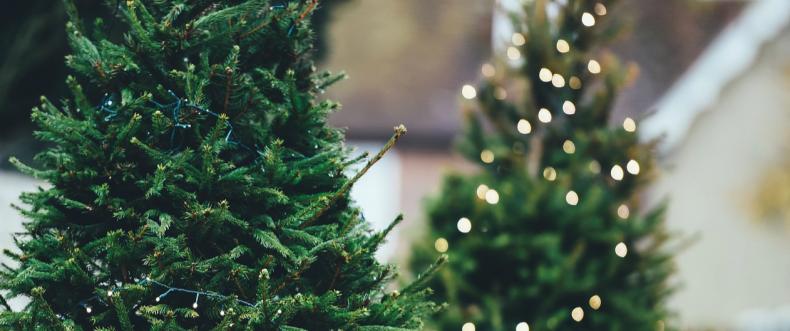 Het krioelt van de onaangename dingen in jouw kerstboom!