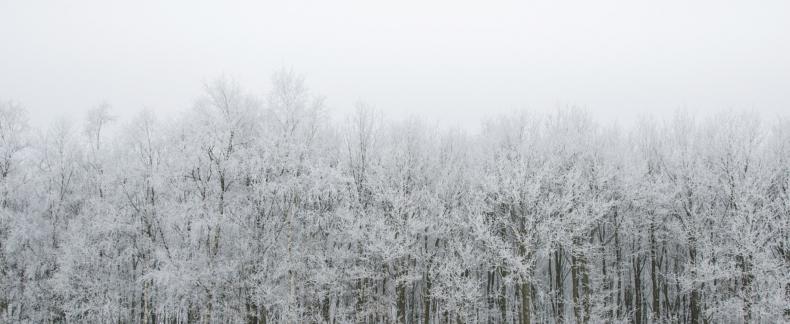 35 dingen om deze winter te doen
