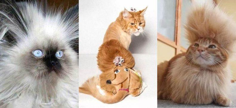 Creatief of zielig? Kattenbazen delen foto's met het kapsel va...