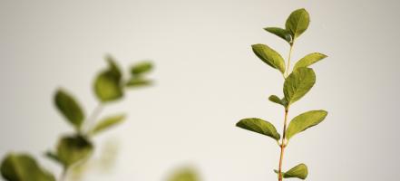 10 simpele dingen die jij kunt doen om groener te leven