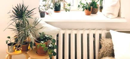 5 slaapkamerplanten die je wil hebben voor een betere nachtrust