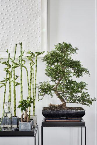 Zenplanten 10