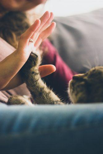 Gezondheidseffecten van huisdieren