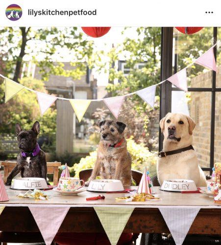 Verjaardagsfeest huisdier