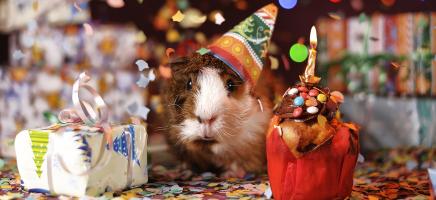 Verjaardagsfeest voor je huisdier, dat wordt lachen!