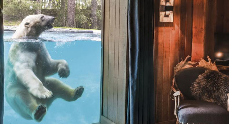 Dit is de mooiste dierentuin in Europa waar je kunt logeren
