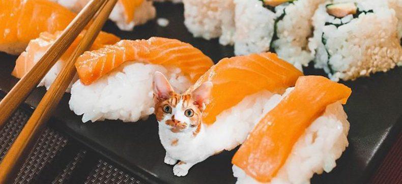 Deze 'cats in food' zijn smakelijk om naar te kijken
