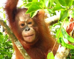 Mama Makan organiseert Bottomless BBQ op World Orangutan Day