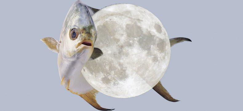 Dit wil je weten over de volle maan op 26 augustus
