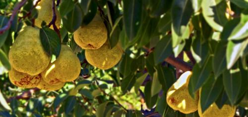 Column Amy: Appels met peren vergelijken