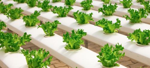 Het pegan dieet: wat is het en is het goed voor je?