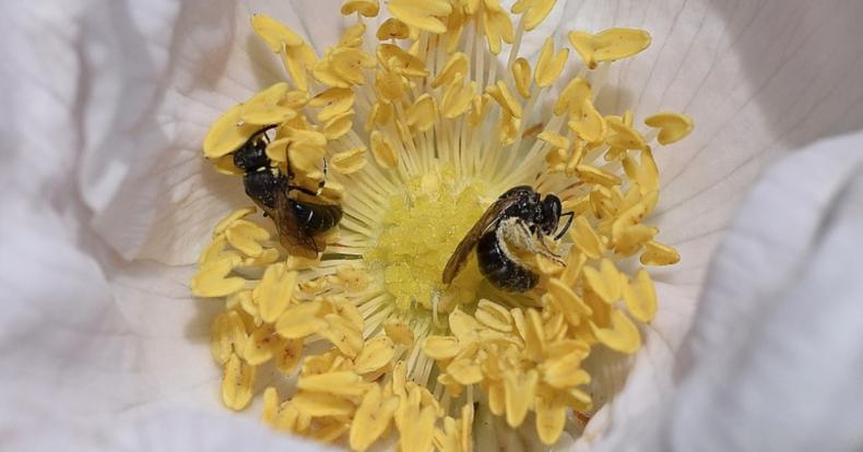 Griezelig: de grootste wespenplaag ooit is op komst