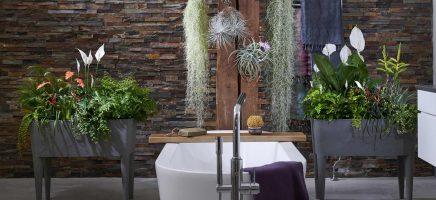4x Badkamerplanten waar je weinig omkijken naar hebt!