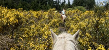 Was jij een paardenmeisje? 3 redenen om weer in het zadel te k...