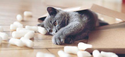 Een fluffy huisdier cadeau geven, beter van niet!