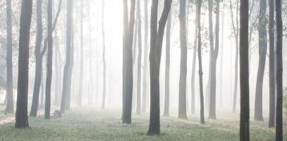 Forest bathing voor het verminderen van stress en vermoeidheid