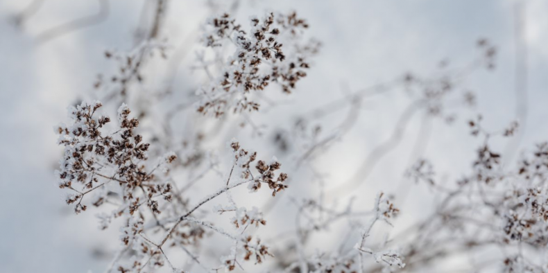 Vijf helende voordelen van sneeuw